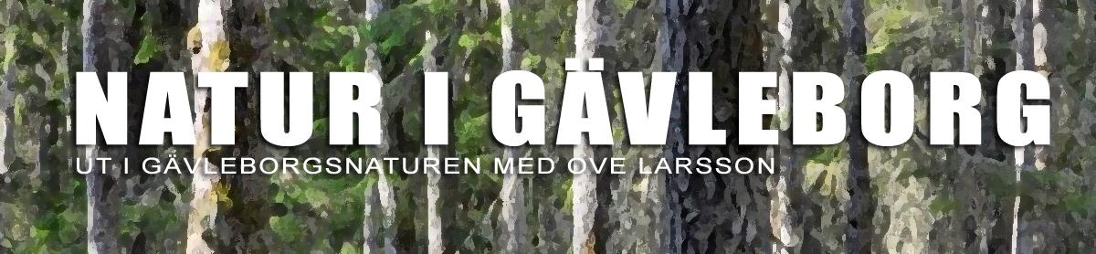 Natur i Gävleborg